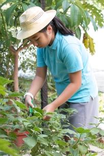Urban_Gardeners_College_Service_-_JS_-_East-19